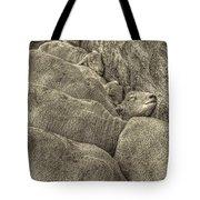 Huddled Yearling Rams Tote Bag