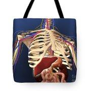Human Skeleton Showing Digestive System Tote Bag