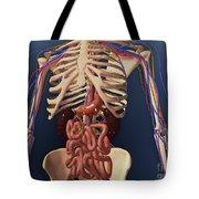 Human Skeleton Showing Kidney, Stomach Tote Bag