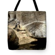 Humboldt Penguin 1 Tote Bag