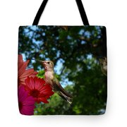 Hummers And Colored Daisies Tote Bag