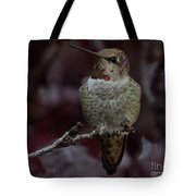 Hummingbird 17 Tote Bag