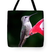 Hummingbird 23 Tote Bag