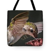 Hummingbird. Tote Bag