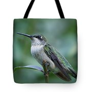 Hummingbird Close-up Tote Bag