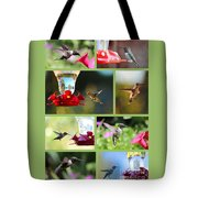 Hummingbird Collage 2 Tote Bag