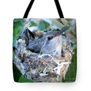 Hummingbird In Nest 2 Tote Bag