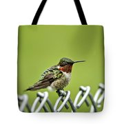 Hummingbird On A Fence Tote Bag