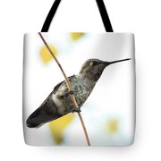 Hummingbird On Tightrope Tote Bag