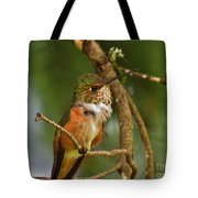 Hummingbird With An Itch Tote Bag