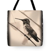 Hummingbird With Old-fashioned Frame 3 Tote Bag
