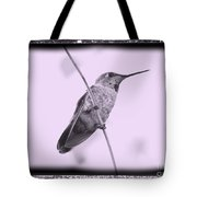 Hummingbird With Old-fashioned Frame 4 Tote Bag