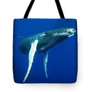 Humpback Whale Calf Tote Bag
