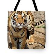 Hunger Tiger Tote Bag