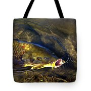 Hungry Carp Tote Bag