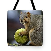 Hungry Squirrel 1 Tote Bag