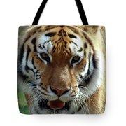 Hungry Tiger Tote Bag