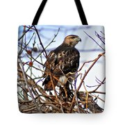 Hunting Red-tailed Hawk Tote Bag