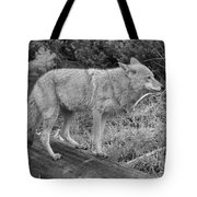 Hunting With Ears Back Black And White Tote Bag