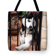Husky Leo Focused Tote Bag