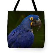 Hyacinth 446 Tote Bag