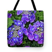 Hydrangea, Macrophylla Teller Tote Bag