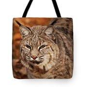 I Am One Good Looking Bobcat Tote Bag