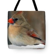 I Just Can't Resist The Beauty Of A Cardinal In The Snow Tote Bag