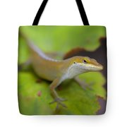 Lloyd's Lookin' At You Tote Bag
