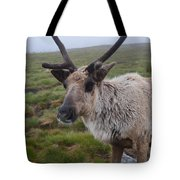 I Think It Might Reindeer Tote Bag