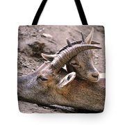 Ibex Mother And Son Tote Bag