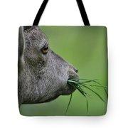 Ibex Tote Bag