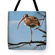 Ibis At  Rest Tote Bag