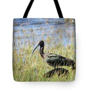 Ibis Looking Around Tote Bag