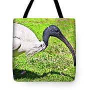 Ibis Looking For Food Tote Bag