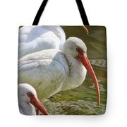 Ibis Three Tote Bag
