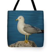 Idaho Sea Gull Tote Bag