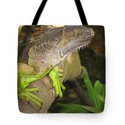Iguana - A Special Garden Guest Tote Bag