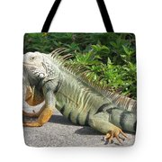 Iguania Sunbathing Tote Bag