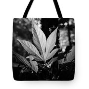 Illuminated Leaf, Black And White Tote Bag