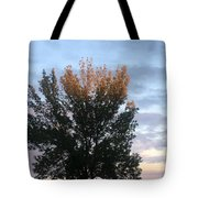 Illuminated Tree Top Tote Bag