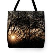 Illuminating Through Trees  Tote Bag