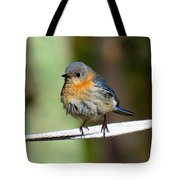 Illusive Female Bluebird Tote Bag