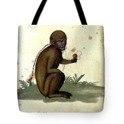 Illustration For A Book By Italian Scientist And Naturalist Ulisse Tote Bag