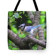 I'm Looking - Blue Jay Tote Bag