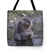 Im Not Fat Im Fluffy Tote Bag