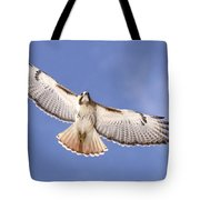 Img-0001 - Red-tailed Hawk Tote Bag