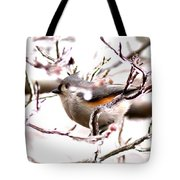 Img_0001 - Tufted Titmouse Tote Bag
