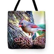 Img_0311 - Northern Cardinal Tote Bag