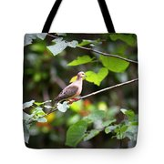 Img_0534-001 - Mourning Dove Tote Bag